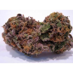 Coyote Blue (Indica Hybrid) - 16 OZ
