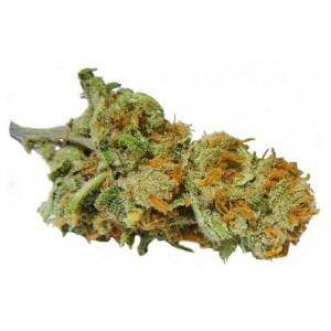 WHOLESALE - BUY WEED ONLINE USA | wholesale cannabis vape